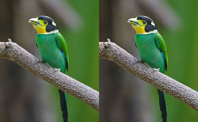Optimiser la taille et le poids des images avec Imagify, célèbre outil de compression